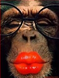 My what big lips you have my dear. Funny Animal Faces, Cute Funny Animals, Funny Animal Pictures, Funny Faces, Cute Baby Animals, Funny Cute, Animals And Pets, Monkey Pictures, Laughing Animals