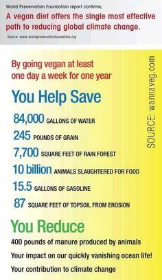 Eating vegan for a week
