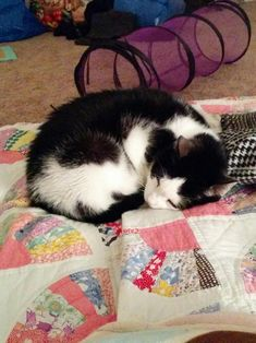 13 years were not enough with this sweetheart by jaderabbit44 cats kitten catsonweb cute adorable funny sleepy animals nature kitty cutie ca
