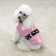 Oh...poodle me