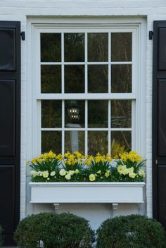 Spring with daffodils and pansies