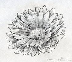 calendula tattoo - Google Search   my next tattoo ... Calendula Flower Drawing