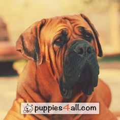 Top 50 Breeds ebook Giveaway - Puppies 4 All - 2019 Your Best Friend, Best Friends, Loyal Friends, Cute Puppies, Dogs, Animals, Image, Amazing, Beat Friends