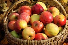 Bon, qui dit automne dit LE TEMPS DES POMMMMMESSSSSS! Je ne sais pas pourquoi les filles trippent à aller aux pommes et y traîner leur chéri malgré lui, mais c'est une de mes activités préfér…