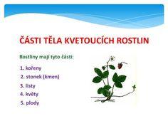 ČÁSTI TĚLA KVETOUCÍCH ROSTLIN Rostliny mají tyto části: 1. kořeny 2. stonek (kmen) 3. listy 4. květy 5. plody. Chart