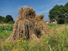 Fotoblog gento5.flog.pl. - Stogi zboża. Stary sposób kopcowania zboża na polu,tzw. dziesiątki, w tej chwili to chyba już dawno zapomniany i ...