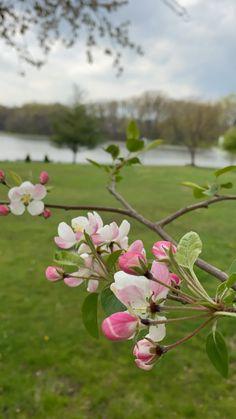 Spring Recipes, Cherry Blossom, Seasons, Plants, Seasons Of The Year, Plant, Cherry Blossoms, Planets