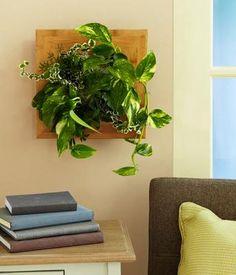 Gift Idea: Wallflower Vertical Garden  #pintowinGifts @giftsdotcom