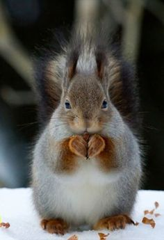 Squirrels little hands make a heart :)