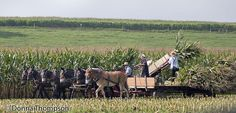 Amish people working on the farm