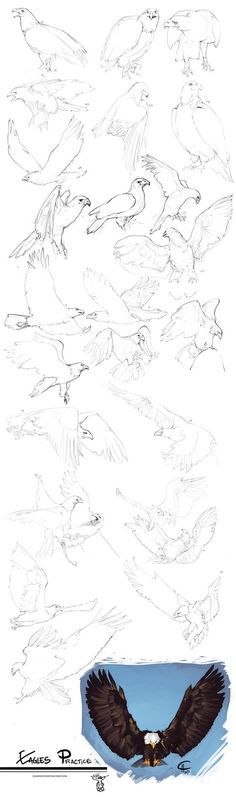 Eagles Practice by Charneco on DeviantArt