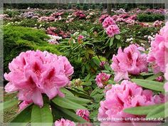 Rhododendronpark Grüngräbchen