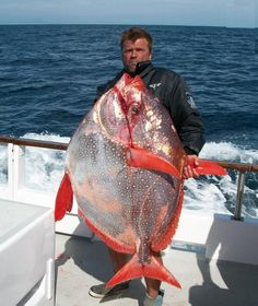 http://3.bp.blogspot.com/-errakKhJjm8/UHFLi4Dv_FI/AAAAAAAAKYk/qXFY1GPeRyI/s1600/OPAH+(Lampris+guttatus+biggest+fish+in+the+world+ever+caught+record+big+huge+fishes+massive+records+largest+IGFA+monster+fishing+ocean+sea+giant+images+lb+pound+pictures+poisson.jpg