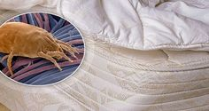 Use This Very Simple Trick to Eliminate Millions of Dust Mites in Your Bed | | Health Digezt
