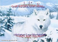 Gb Bilder, Husky, Dogs, Animals, Good Morning Wednesday, Good Morning Images, Good Day, Advent Season, Animaux