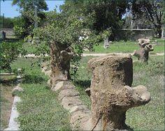 Fence along west side of Derr plot