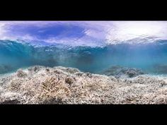 This Is The Great Barrier Reef Like You've Never Seen It Before