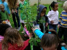 Peace Seed Connection Archive | American Montessori Society