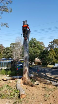 When you are looking for tree removal St Helens Park or tree maintenance services, there will be a number of companies that show up on internet searches. But if you want qualified and experienced arborists to handle the job you need look no further than Alex Tree Services. Stay with us.