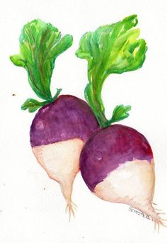 Colorful Turnips watercolor painting original  by SharonFosterArt, $15.00