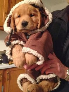 50 Best Dressed Up Pets Images On Pinterest Doggies Cute Dogs And