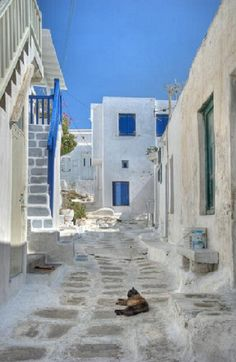 "Mykonos and the obligatory ""Foreign Cat In A Pretty Street"" shot! Love it!"