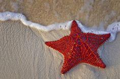 linkia starfish perder piernas diabetes