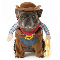 Thrills & Chills™ Pet Halloween Stand Up Cowboy Pet Costume   Costumes…