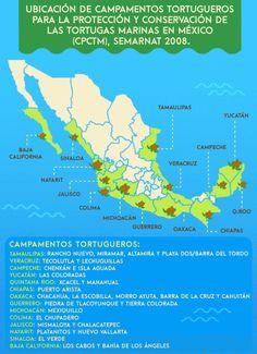 Campamentos Tortugueros En México: ¿qué son y dónde encontrarlos?