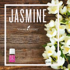 The sweet, romantic scent of Jasmine essential oil helps relax the mind and boost self-confidence. Here are just a few of our favorite tips for using this exotic floral oil: • Place a drop or two on your neck or temples. • Support the health of your skin by adding a drop of Jasmine to a daily application of body lotion.  • Rub 1 drop into your palms, then smooth your hands over your pillow to leave behind a light, relaxing Jasmine fragrance. www.oils1st.com