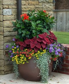 Stunning Container Gardening Ideas Beautiful blossoms are a sure sign of Spring, and soon enough we will all be able to enjoy brightly adorned gardens. If you love container gardening, then this list of ideas just may inspire you w…Beautiful blossoms are Outdoor Flowers, Outdoor Plants, Potted Plants Patio, Pot Plants, Outdoor Flower Planters, Fence Plants, Plant Pots, Shade Plants, House Plants