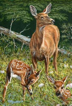 """Mother's Worry"" - whitetail deer painting by Richard De Wolfe"