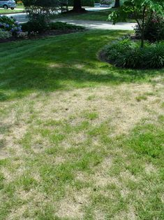 How to fix dead patches of grass (Did I ever mention I hate grass, it's so dumb)