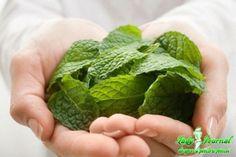 Ce problema a pielii poti trata cu pasta-minune obtinuta din pisarea frunzelor de menta
