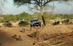 The Serengeti is one of Africa's most spectacular sights and the best place for African Safari. Contact me for latest deals: zoraa@travelmanagers.com.au holidaysandcruises.com.au #Africa #African Safaris