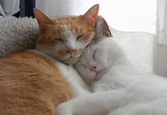 18 Incredibly Cute Pictures of Cuddling Cats