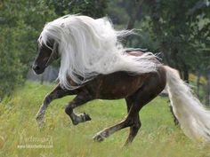 25 чудесных лошадей, от красоты которых перехватывает дыхание – Фитнес для мозга