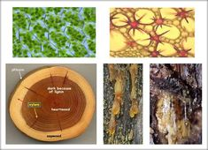 Ţesuturi vegetale După gradul de diferenţiere a celulelor distingem două tipuri de ţesuturi vegetale: ţesuturi embrionare şi ţesuturi definitive. Ţesuturi embrionare Ţesuturile embrionare (ţesuturi formative, meristeme) sunt formate din celule care se divid. Se formează astfel celule ...