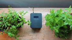 Hydra - Your Plant Care Companion! by Brian Ong —Kickstarter