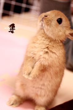 Cute Little Begging Bunnie