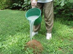 Fire Ant - Control. Tips on dealing with a Southern gardeners scourge.