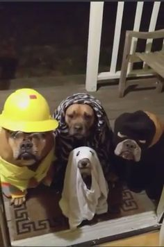 Have treats handy tonight - Lustiges tier Funny Dog Videos, Funny Animal Memes, Cute Funny Animals, Funny Animal Pictures, Cute Baby Animals, Funny Cute, Funny Dogs, Animals And Pets, Animal Humor