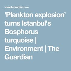 'Plankton explosion' turns Istanbul's Bosphorus turquoise | Environment | The Guardian