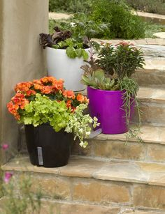Our WaterEase Self-Watering Planter has an adjustable Smart-Port Reservoir to ensure plants receive optimal watering in all conditions. Contemporary Planters, Modern Planters, Outdoor Planters, Diy Planters, Garden Planters, Planter Pots, Self Watering Planter, Garden Spaces, Green