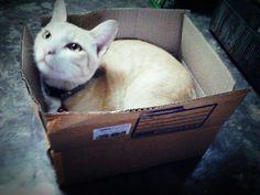Packaging Mew