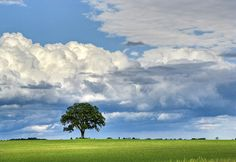 Clouds, Tree, Green Field
