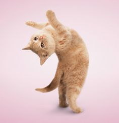 yoga cat and pink