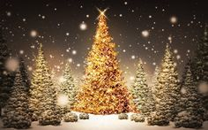 New Post gold christmas tree wallpaper Gold Christmas Tree, Beautiful Christmas Trees, Christmas Pictures, Merry Christmas, Christmas Time, Christmas Movies, Xmas Trees, Christmas Jesus, Outdoor Christmas