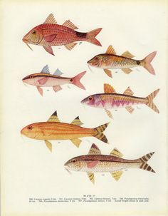 One fish, two fish, pink fish, let's hang this in the house fish.