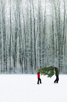 ♕ Carrying the tree home. I usually drag mine through the snow. :)